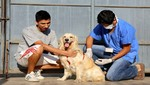 Enfermedad de mayor impacto transmitida por animales en el país es la rabia