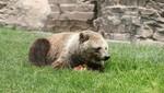 Parque de las Leyendas protege a su colección zoológica ante aumento de calor