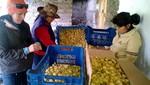 70 productores en Áncash producirán aguaymanto libre de enfermedades