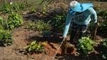Un millón de árboles son plantados en Tambopata y Bahuaja Sonene para frenar avance de la deforestación