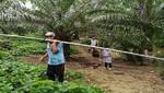 Aprobación del Plan Nacional de Desarrollo Sostenible de Palma Aceitera lleva paralizado más de un año