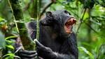 """Para sobrevivir en la naturaleza todos los animales necesitan tener una """"Estrategia Salvaje"""""""