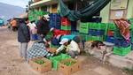 Agricultores de Tapay, Arequipa, alcanzan récord de producción de paltas y empiezan a exportar a Europa