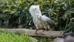 Se dispuso el ingreso de ejemplares de aves exóticas al Parque de La Muralla
