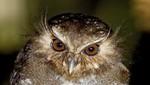 Global Big Day: Perú se consolida como el segundo país del mundo con mayor avistamiento de aves