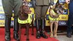 Nat Geo Wild presenta 'Misión Canina'