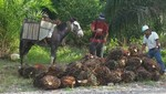 Asociaciones gremiales latinoamericanas del sector palmero crean Consejo Latinoamericano de Cultivadores y Productores de Aceite de Palma