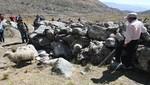 SERNANP busca disminuir sobrepastoreo en Parque Nacional Huascarán mediante monitoreo de ganado