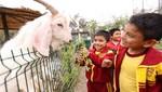 MML celebra Día del Niño a lo grande en los Parques y Clubes Zonales