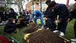 Día del árbol: más de doscientos árboles se sembraron en Miraflores