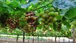Agroexportaciones peruanas a Indonesia crecen 261%