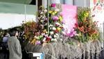XII Festival Internacional de Orquídeas exhibirá más de 800 ejemplares