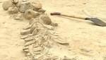 Hallan el mayor cementerio de ballenas en Chile (video)