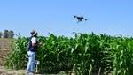 El INICTEL-UNI y el INIA presentaron resultados de proyecto que busca mejorar el rendimiento del maíz amarillo duro