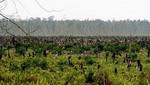 Bosques de Indonesia siguen amenazados por la industria del aceite de palma, según investigación de Greenpeace