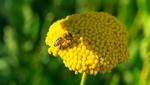 80 organizaciones europeas exigen la prohibición total de los insecticidas dañinos para las abejas
