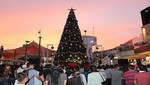MegaPlaza encenderá el árbol más imponente de Lima Norte