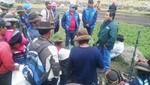 MINAGRI sembró 300 mil plantones de pino en cuencas altas de Ayacucho