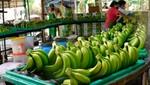 Exportaciones peruanas de bananas crecerían por lo menos 10% en próximos tres años