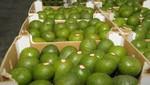 Agroexportaciones peruanas ascendieron a us$ 5 mil 184 millones