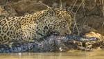 La 'Semana de Grandes Felinos'  regresa a Nat Geo WILD