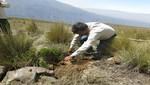 Arequipa: Recuperan bosque de Queñual en la Reserva Nacional de Salinas y Aguada Blanca