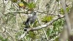 Registran nuevas especies de aves en el Parque Nacional Cerros de Amotape