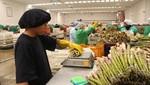 Zona Nor Oriental del Perú podría exportar alimentos por casi US$ 7 mil millones en 5 años