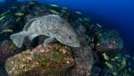 En el 'Día mundial del medio ambiente' National Geographic emite programación temática durante todo el día