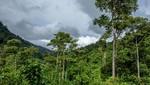 Ministerio del Ambiente reconoce dos nuevas áreas de conservación regional en la región Amazonas