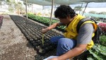 Más de 40 mil plantas mensuales producen viveros de la MML en beneficio de todos los vecinos