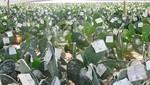 Límite de compra de materia prima en el agro será de s/. 311 mil desde el 1 de octubre