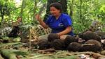 Se inicia proyecto para aprovechamiento y ordenamiento de castaña que beneficia a 650 familias de RN Tambopata
