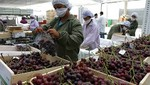 Agroexportaciones a la Unión Europea marcan récord histórico al primer semestre del 2018