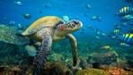 Las islas galápagos, un paraíso en la mitad del mundo
