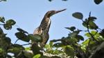 Una nueva especie de ave es identificada por primera vez en el Parque Nacional Cerros de Amotape de Tumbes