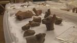 Hallan más de 40 representaciones de camélidos en cerámica en Zona Arqueológica Monumental de Wiraqochapampa