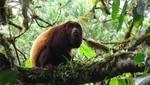 3 nuevas Áreas de Conservación Privada son reconocidas en Madre de Dios, Cajamarca y Amazonas