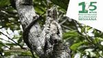 Se abrieron las inscripciones para la I maratón de birdwatching en la Reserva Nacional Allpahuayo Mishana