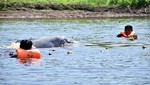 Reserva Nacional Pacaya Samiria culminará en marzo monitoreo satelital a delfines de río