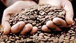 Café peruano que se exporte será amigable con el medio ambiente