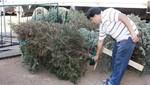 Centros de acopio de árboles navideños abren hasta el 3 de febrero