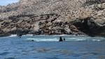 Sernanp lanza nuevo destino de naturaleza en la RNSIIPG: 'Islas Guañape'