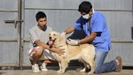 Este año Minsa vacunará contra la rabia a cerca de cuatro millones de canes