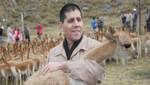 En el Día del Campesino: Reflexiones sobre la vicuña