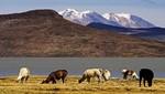 Un viaje a la flora y fauna de la Reserva Nacional Salinas y Aguada Blanca
