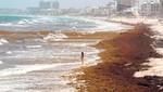 Cancún tiene un desagradable problema con las algas marinas y los turistas se mantienen alejados