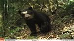 Cajamarca: Cámaras trampa captan la sorprendente fauna de los Bosques Nublados de Udima