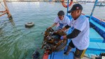 Se recolectó 1.7 toneladas de residuos sólidos en limpieza de fondo de mar en el DPA Ilo