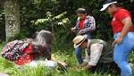 Sembrando Vida en la Amazonía continúa reforestando las calles de Iquitos con árboles nativos